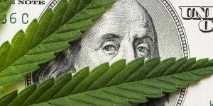 cannabis industry news blog